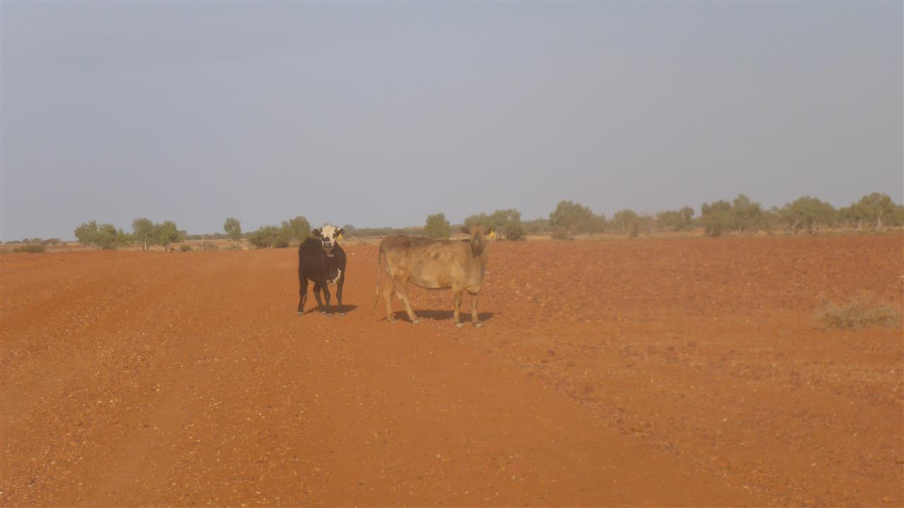 271c9c2e6b0ec My brown tinged laundry has almost dried, having been draped over 4 kitchen  chairs from the cabin, some interesting varieties of moth were evicted from  Ians ...